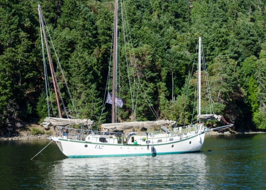 Taz, seen in Lyall Harbour, Saturna Island, BC.